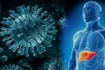 Хронический гепатит С: влияние на организм, основные стратегии лечения