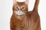 Беззаботная жизнь вашей кошки