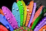 Что расскажет ваш любимый цвет о вас?